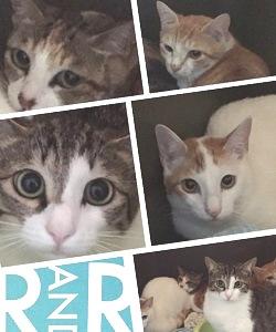 日本猫4匹 ペットホテル